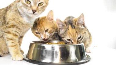 Feeding kittens — Stock Video