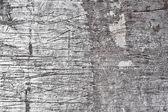 Concrete wall — Stock Photo