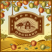 Apple Orchard — Stock Vector