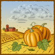 Landscape with pumpkins — Stock Vector