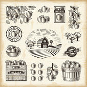 Vintage apple harvest set — Stock Vector