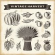 Vintage harvest set — Stock Vector
