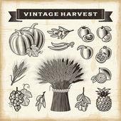 Vintage harvest set — Stock Vector