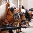 Horses in harness — Stock Photo #26724557