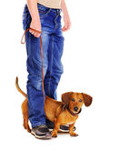 Dog on a leash r eady to go for a walk — Stock Photo