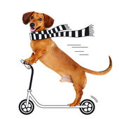 Dachshund dog riding the cartoon scooter — Stock Photo