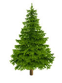 New Year. Christmas. Spruce. Spruce Christmas. White background.. Illustration. — Stockfoto