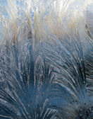 Frost on the window glass under the sunlight — Stock Photo