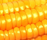 Closeup view of corn — Stock Photo