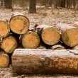 Stock Photo: Large sawn timber
