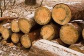 Large sawn timber — Stock Photo