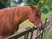 Brown Horse — Stockfoto