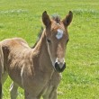 Stock Photo: Young Foal