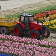 Tulips, Miniature Town, Netherlands — Stock Photo