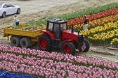 Tulpen, miniatur-stadt, niederlande — Stockfoto
