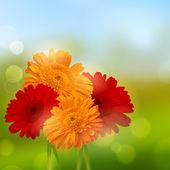 Gerbera květinové pozadí — Stock vektor