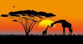 African savanna an evening landscape — Stock Vector