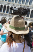 Pigeon sitting on the head of the girl — Stock Photo