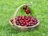 Cherry basket — Stock Photo