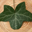 Ivyleaf on a board — 图库照片