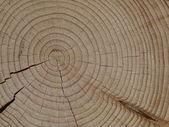 Picea — Foto de Stock