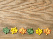 Foliage on a board — Stock Photo