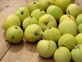 Apples - malus domestica white transparent — Stock Photo
