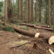 Stock Photo: Forestry