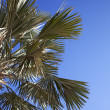 An image of nice palm trees in the blue sunny sky — Stock Photo