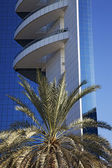 Palm tree against glass and iron business buildings — Stock Photo