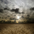 Sunset over cereals field — Stock Photo