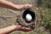 Hands holding nest with egg.  — Stock Photo