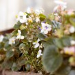 Green house shop with potted flowers — Stock Photo #13617775