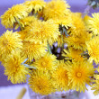 Collection of  yellow dandelions - Stock Photo