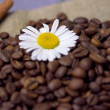 Coffee beans with chamomile — Stock Photo #18690357