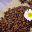 Stock Photo: Coffee beans with chamomile
