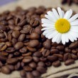 Coffee beans with chamomile — Stock Photo