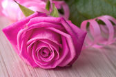 Pink rose with serpentine — Stock Photo
