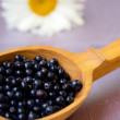 Fresh juicy blueberry fruits — Stock Photo
