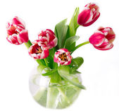 Bouquet of pink tulips in a vase — Stock Photo