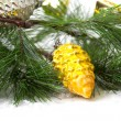 Cone and christmas tree isolated — Stock Photo #32614039
