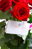 Red rose isolated on Holiday — Stock Photo