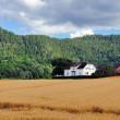 Norwegian Countryside — Stock Photo