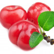 Fresh cherry - Stock Photo
