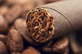 Cigar and coffee beans — Stock Photo