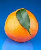 Mandarino arancia fresca — Foto Stock
