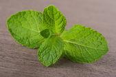 Fresh green mint — Stock Photo