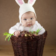 Easter bunny in the basket — Stock Photo #20403185