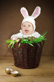 Funny Easter bunny in the basket — Zdjęcie stockowe