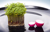 Island of cress and boats of radish — Stock Photo